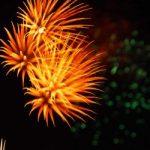 名古屋みなと祭り2019の駐車場や屋台、花火の穴場スポットの情報まとめ