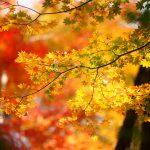 志賀高原の紅葉2018見頃の時期や駐車場などまとめ