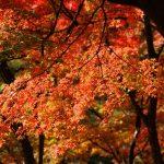 軽井沢の紅葉2018見頃時期やおすすめスポットまとめ